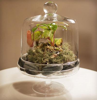 Флорариум: мини-сад в квартире