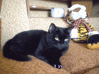Учим домашнюю кошку не царапать мебель